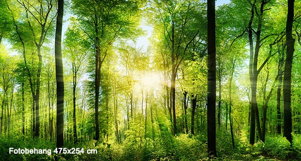 Vlies fotobehang Zonnestralen in het bos  Muurmode.nl