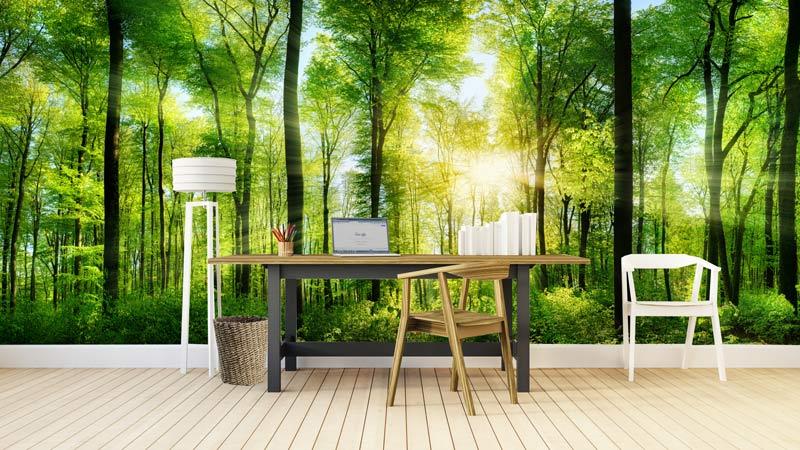 ... bos € 160 00 een mooie panorama foto van een bos die opgelicht wordt