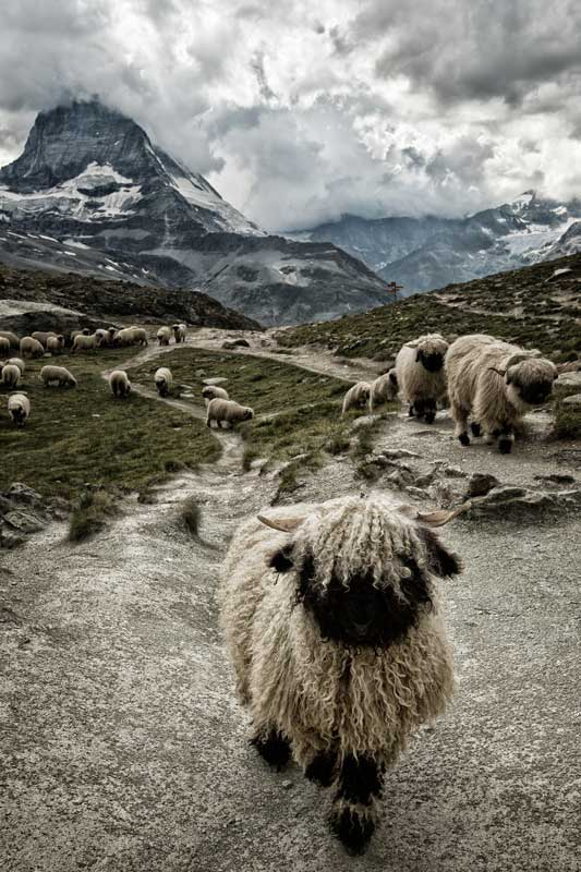 Vlies fotobehang Schapen in de bergen