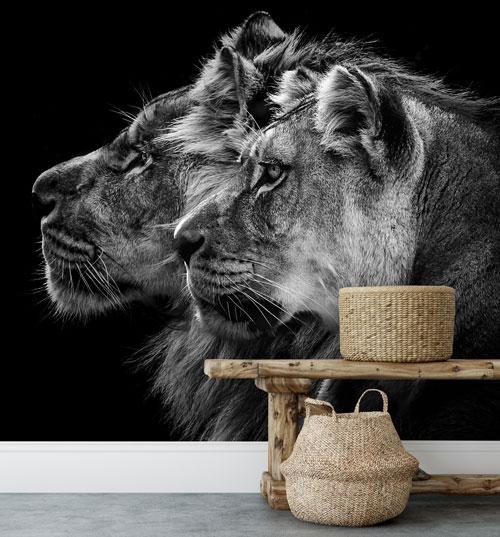 Vlies fotobehang Leeuw en leeuwin