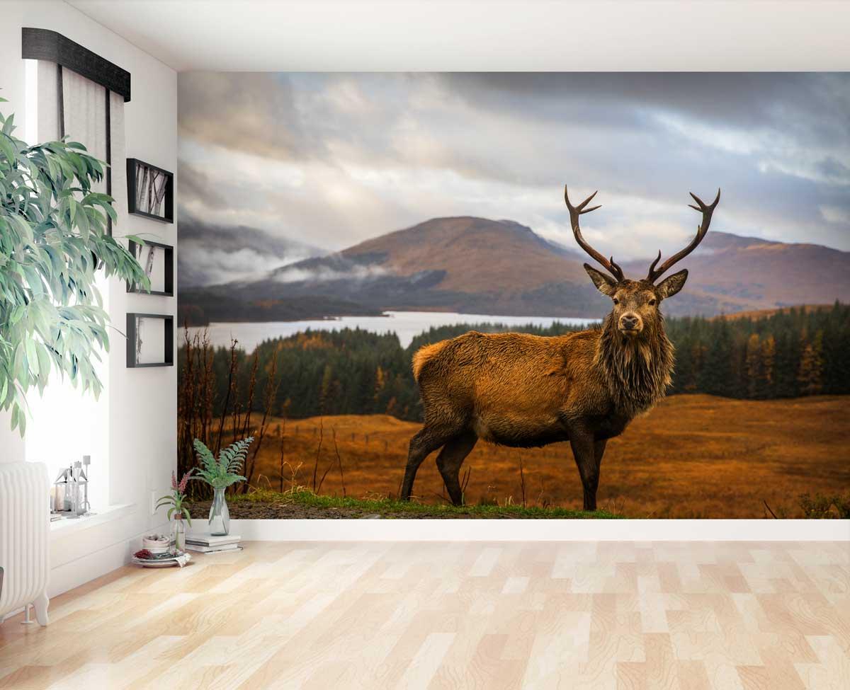 Vlies fotobehang Hert in Schotland