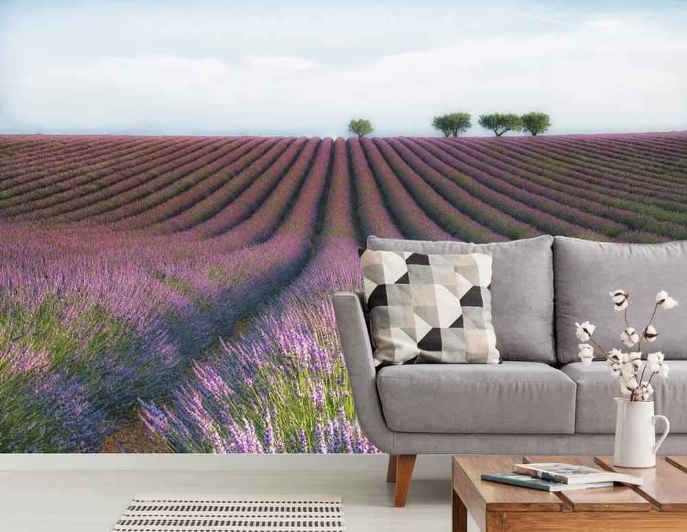 Vlies fotobehang Lavendel
