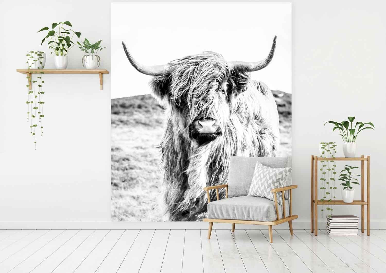 Vlies fotobehang Schotse hooglander