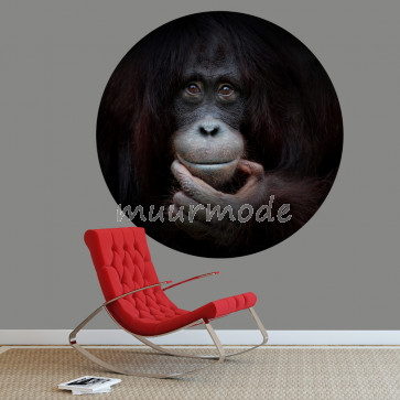 Behangcirkel Chimpansee