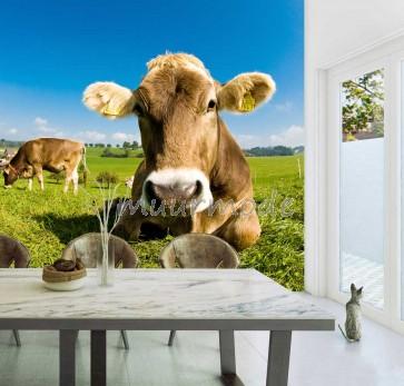 Luierende koe in gras