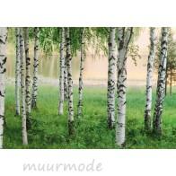 Fotobehang Nordic Forest