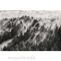 Vlies fotobehang Misty forest