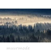 Vlies fotobehang Naaldbos in de mist