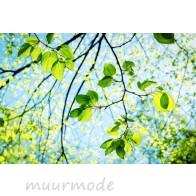 Vlies fotobehang Voorjaarszon