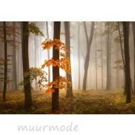 Fotobehang Foggy Autumn Forest