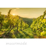Vlies fotobehang Wijnveld bij zonsopkomst