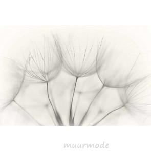 Vlies fotobehang Dandelions zwart en wit