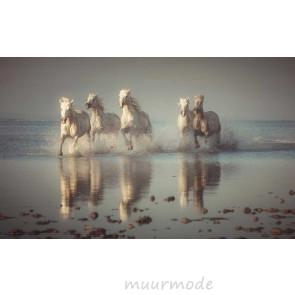 Vlies fotobehang Camargue paarden