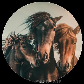 Behangcirkel Paardenfamilie