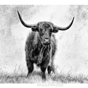 Vlies fotobehang Schotse hooglander in het gras