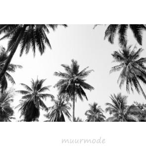 Vlies fotobehang Palmen