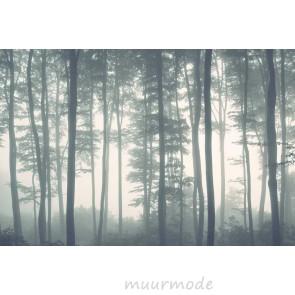 Fotobehang bomen in mistig bos