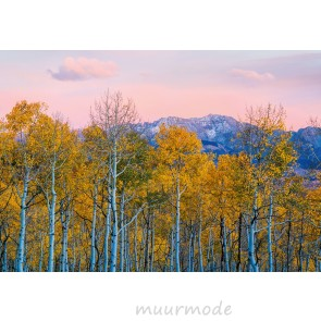 Fotobehang Birches and Mountains