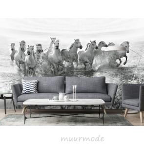 Fotobehang White Horses running