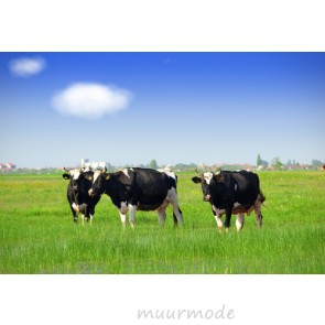 Vlies fotobehang Grazende Koeien