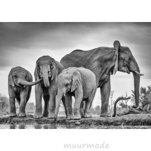 Vlies fotobehang Olifanten