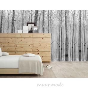 Vlies fotobehang Bomen zwart en wit