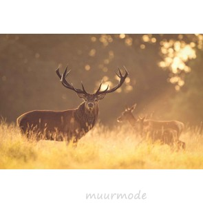Vlies fotobehang Hert in het ochtendlicht