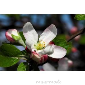 Tuinposter Appelboom bloesem