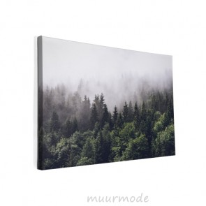 Foto op canvas Bos in de mist