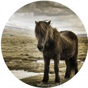 Ronde sticker Paard