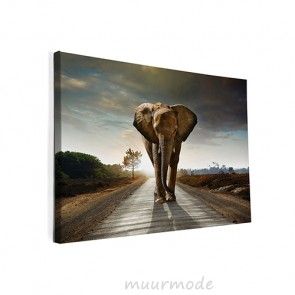 Foto op canvas Olifant