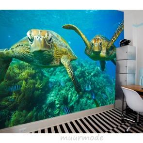 Vlies fotobehang Zeeschildpadden