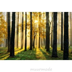 Vlies fotobehang Schaduwen in het bos