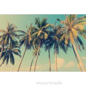 Fotobehang Tropische palmbomen