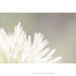Vlies fotobehang Witte bloem bij vorst