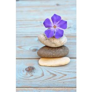 Tuinposter Viooltje met stenen