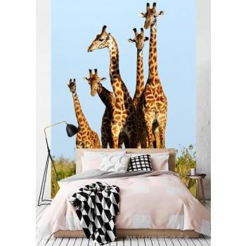 Fotobehang giraffen