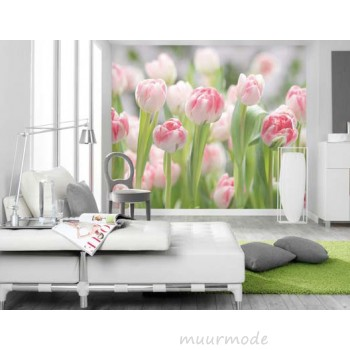 Een mooi tulpenveld