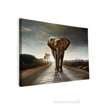 Foto op canvas Olifant