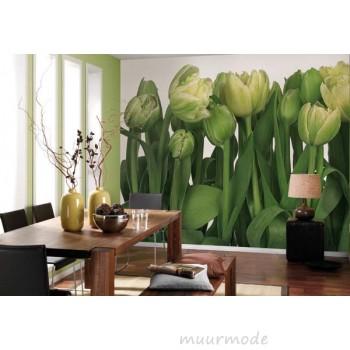 Een veld vol tulpen