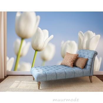 Vlies fotobehang Witte tulpen
