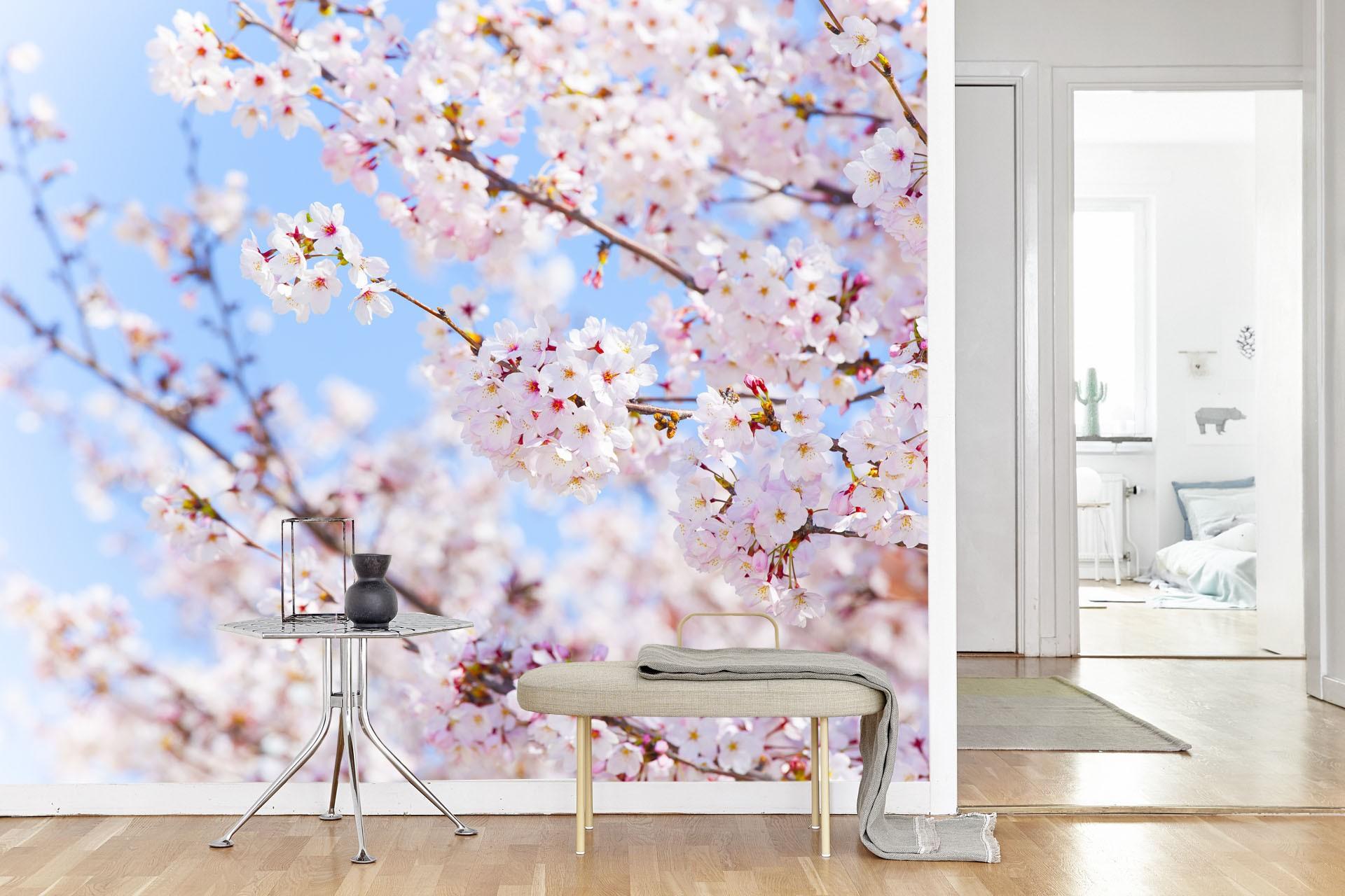Vlies fotobehang Japanse Kersenbloesem