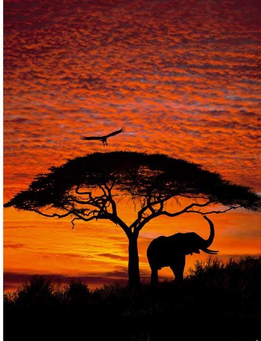 Ondergaande zon over Afrikaanse Savanna