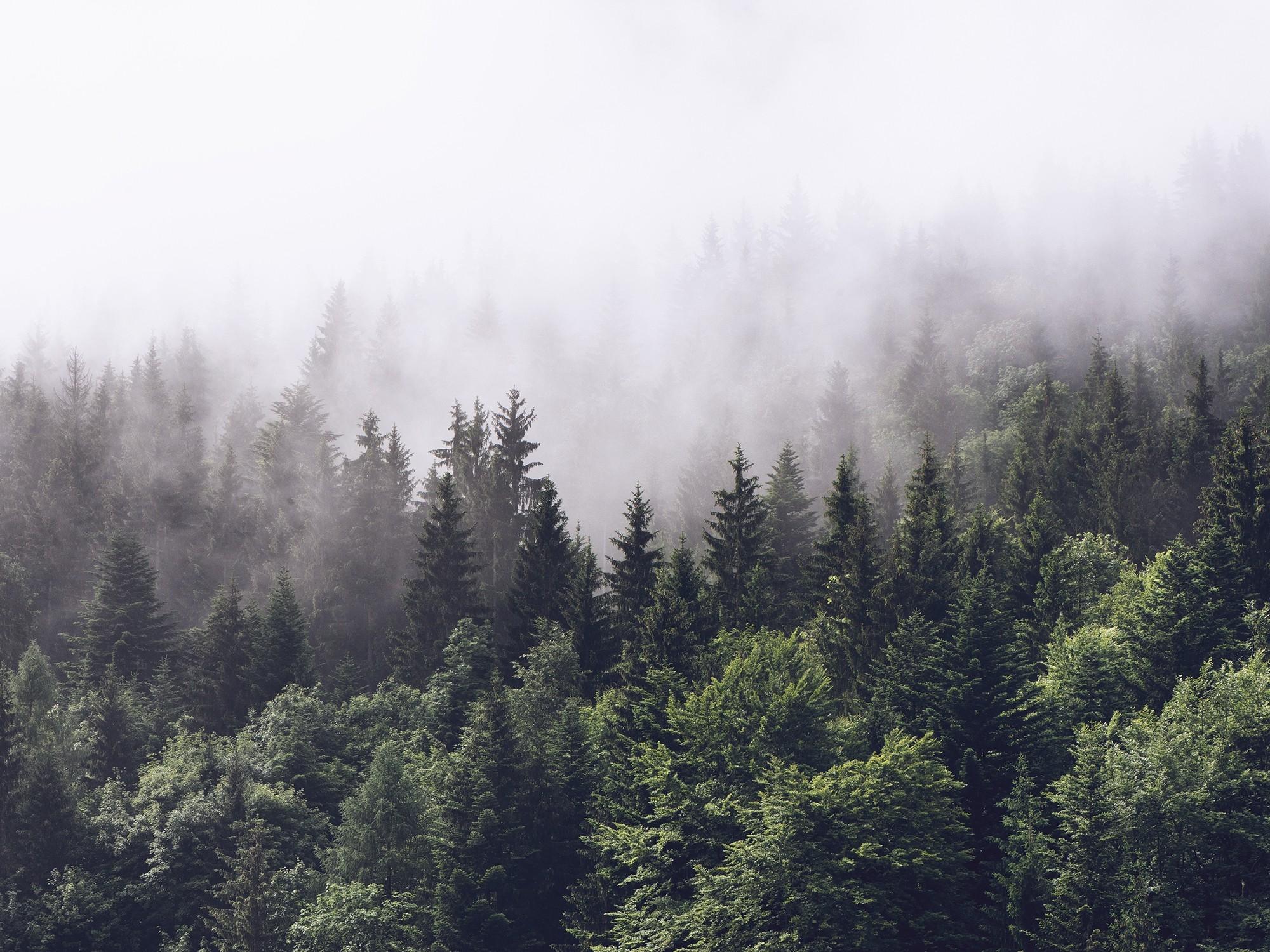 Canvas Bos in de mist