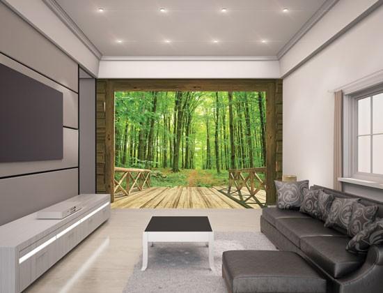 Fotobehang Woodland Forest