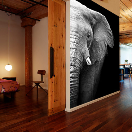 Vlies fotobehang Olifant Close-up