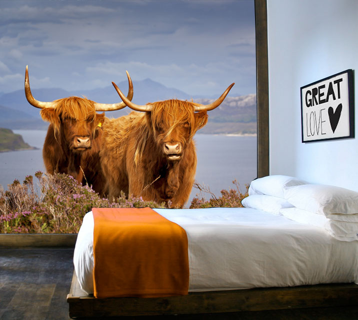 Vlies fotobehang Schotse koeien