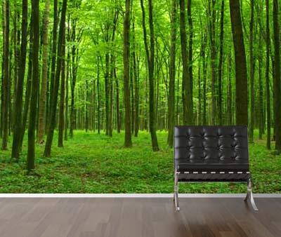 Vlies fotobehang Groene Bomen